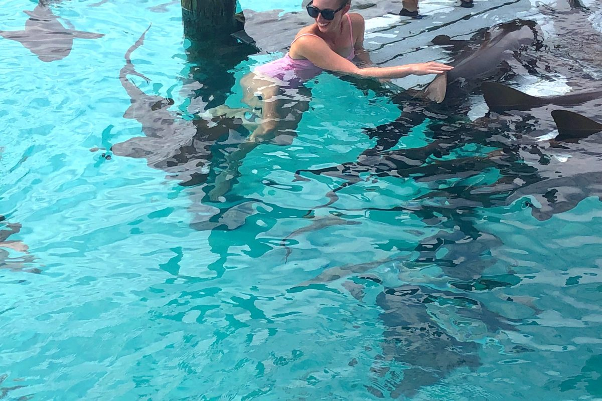 Nurse Sharks at Compass Cay – Seek To See More