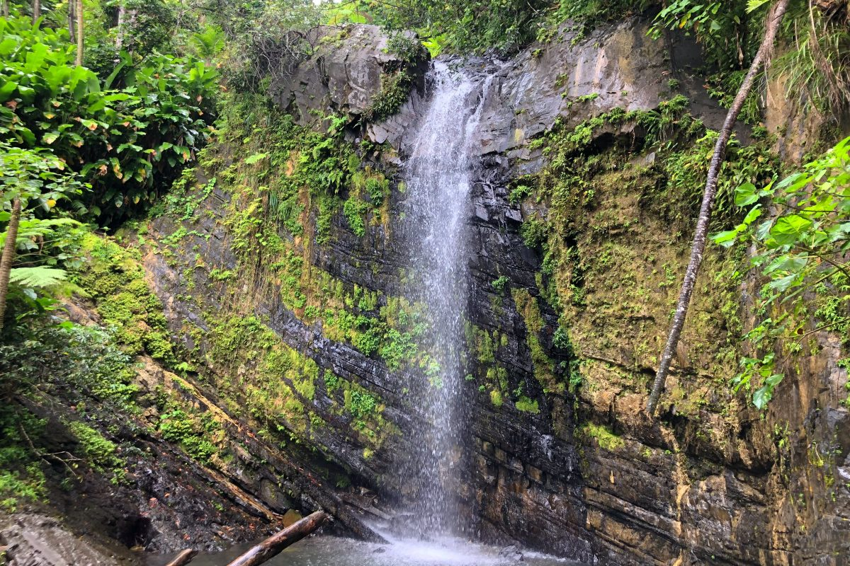 Hiking El Yunque: An Enchanted Forest a World Away